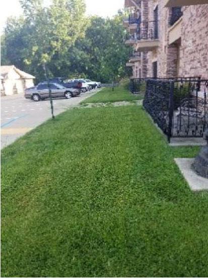 Apartment complex grass - after
